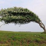 Blowing Tree
