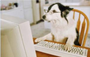 Dog Reporter